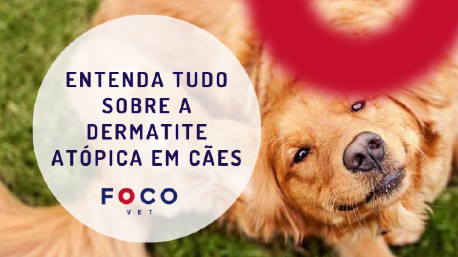 Dermatite Atópica em Cachorro